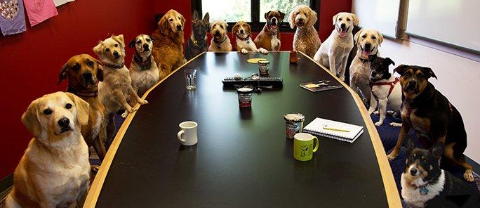Hundar som ser allvarliga ut vid ett styrelsebord.